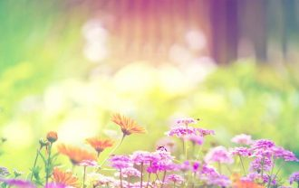 wallpaper-spring-photo-08